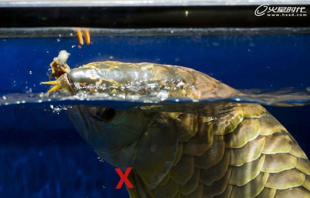 教你4招拍巨型鱼缸宠物